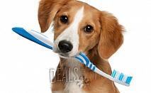 Почистване на зъбен камък на куче/котка за 28лв от Ветеринарен кабинет Арес